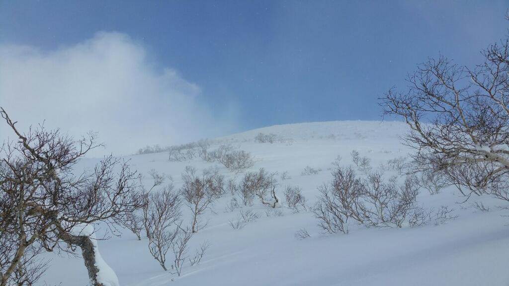 Baumgrenze in Niseko Japan